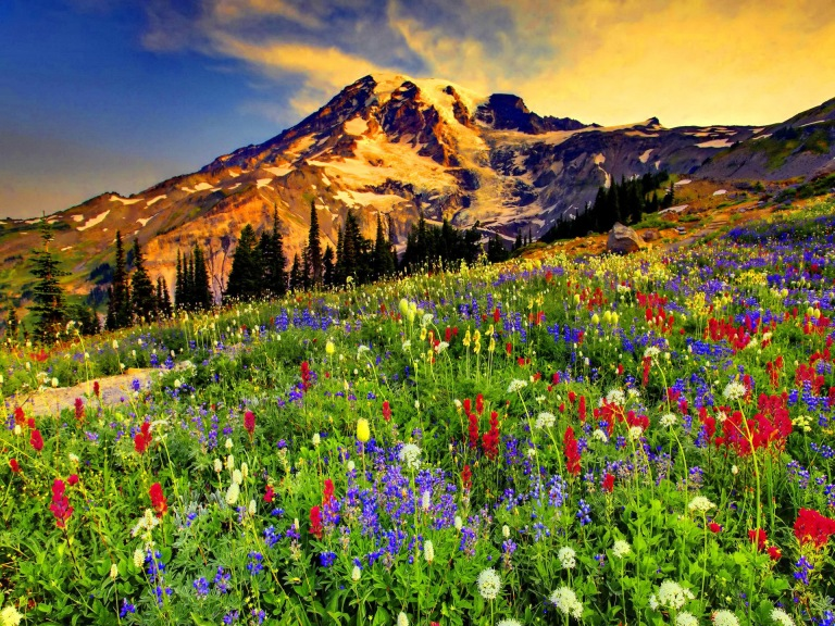 Flowers-In-The-Mountains-Best-Wallpaper (1)